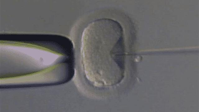 history of in vitro fertilization Preimplantation genetic testing is a technique used to identify genetic defects in embryos created through in vitro fertilization (ivf) before pregnancy.
