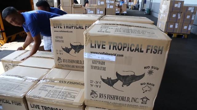 Operation Rock Bottom investigates Florida's aquarium trade