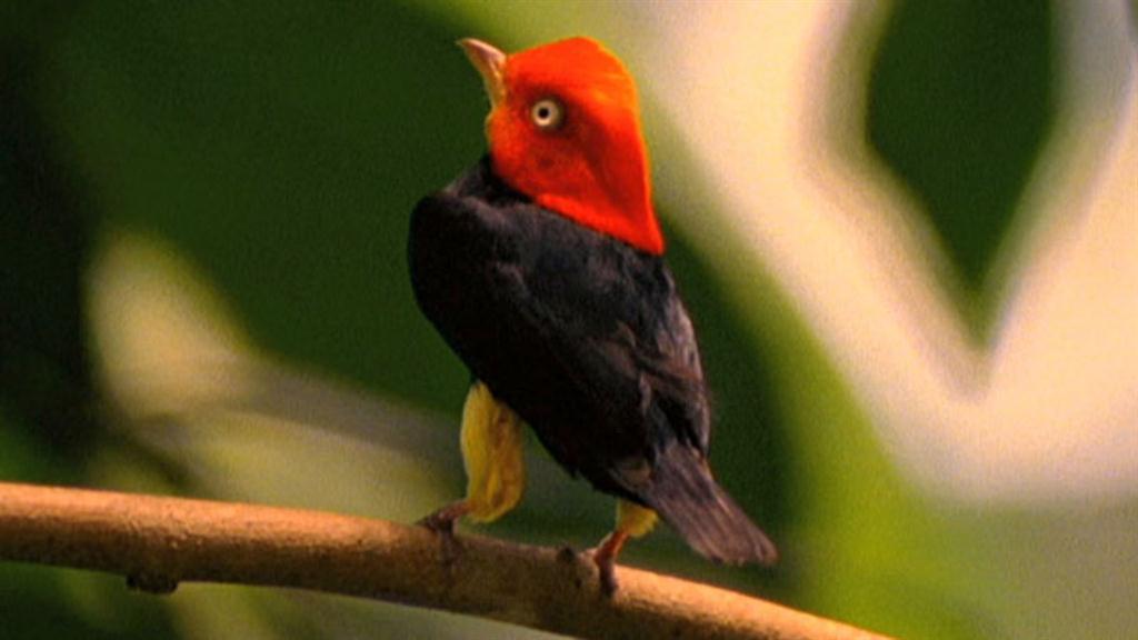World's Weirdest: Birds