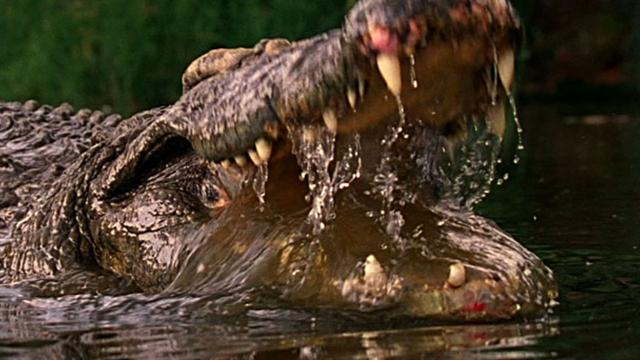 World's Deadliest: Crocs Kill With Strongest Bite