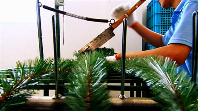 I Didn T Know That How Christmas Trees Are Made