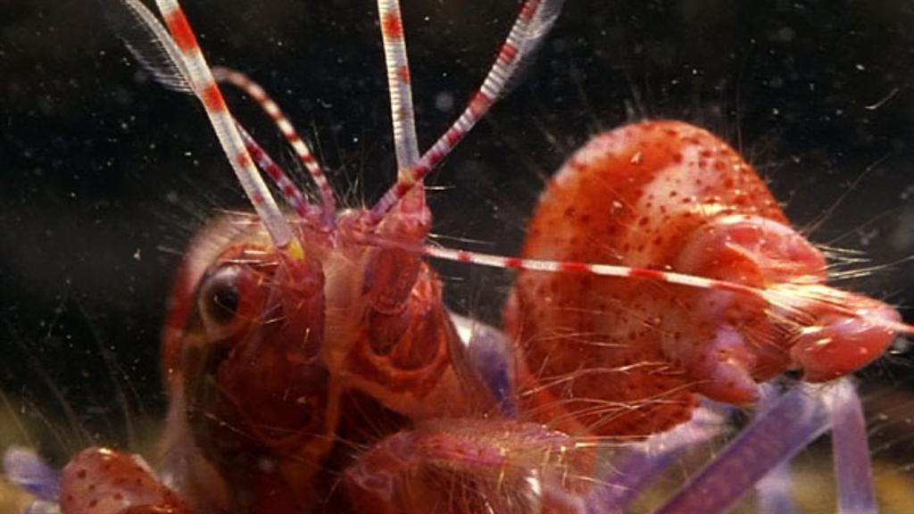 World's Deadliest: Amazing Pistol Shrimp Stun