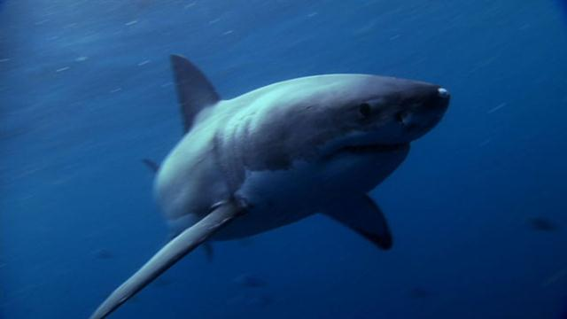 World's Deadliest: Shark Superpowers