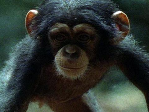 Bonobos Baby Clothes