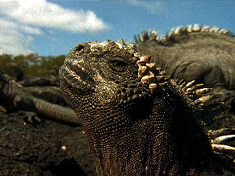 Gal 225 Pagos Islands